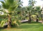 Фото туриста. Пальмовая аллея