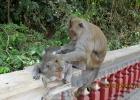 Фото туриста. Лес обезьян.