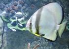 Фото туриста. Sharjah Aquarium - сам Аквариум