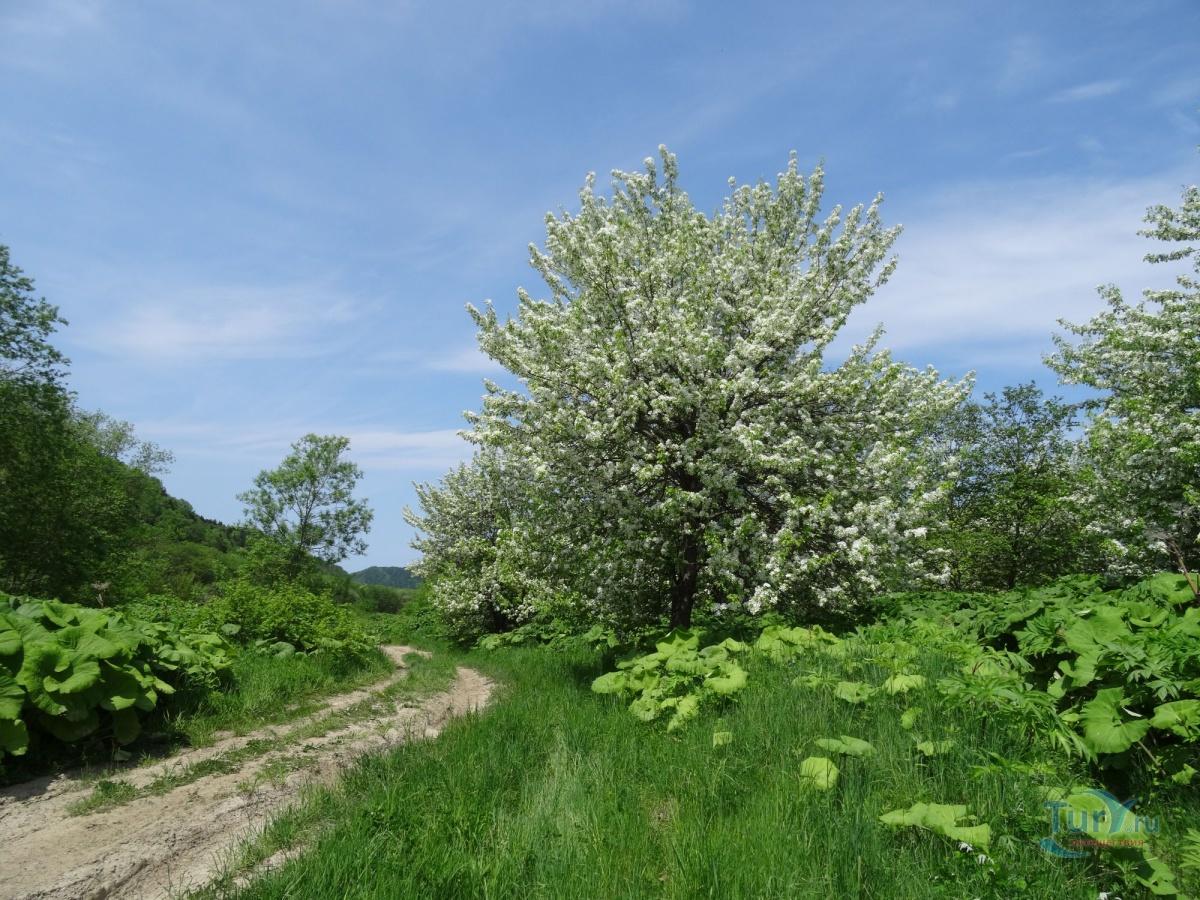 днепре сахалинская весна фото мне приятно когда