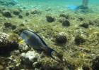 Фото туриста. коралловый пляж отеля Шарм риф