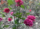 Фото туриста. Цветники на территории