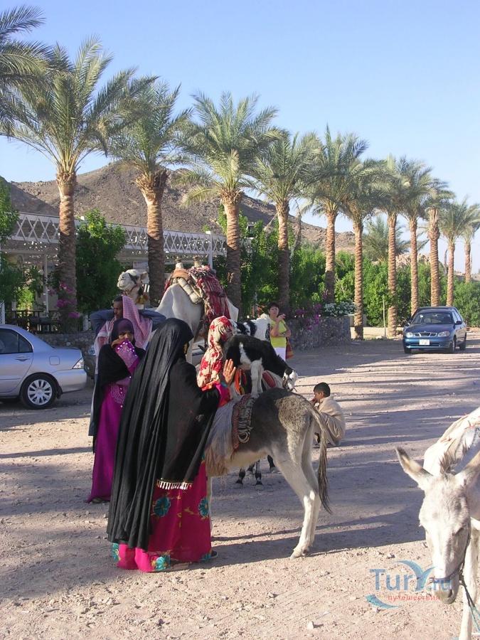 Знакомство египет
