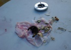 Фото туриста. этот ужас на столе в саду не убирали 3 дня