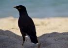 Фото туриста. Житель Sandy Beach Hotel & Resort