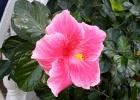 Фото туриста. цветы на территории Сантаны