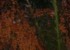 Фото туриста. Куча воробьев на пальме- спят