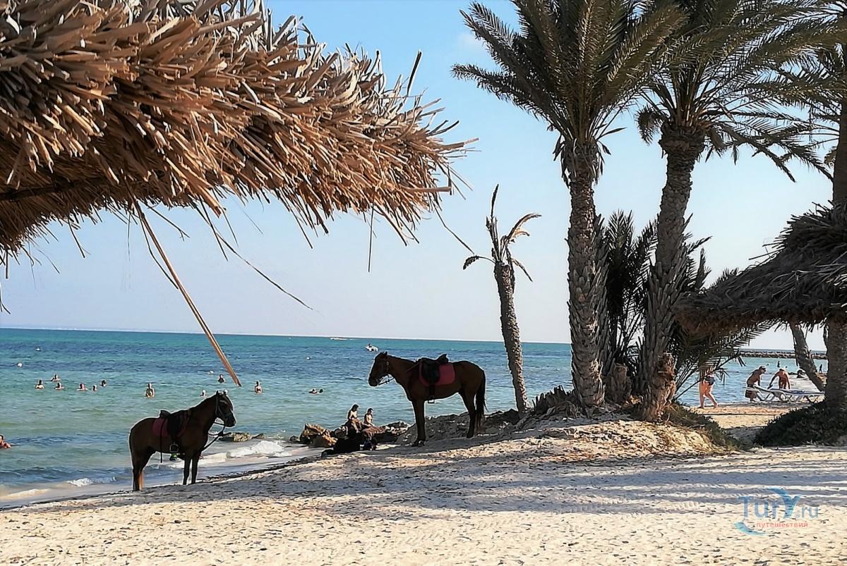судьба остров джерба тунис отзывы туристов фото поэтому