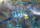 Фото туриста. это рыбки в море которые едят шкурку от банана