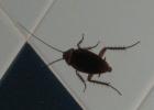 Фото туриста. таракан в ванной