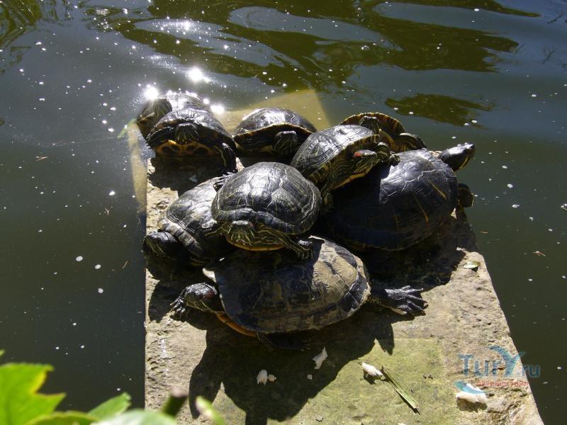 магазинов нячанге лимпопо красноярск фото черепахи чем причина