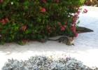 Фото туриста. Египетский кошак, которых там масса