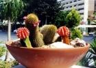 Фото туриста. Слишком символический букет кактусов в одном из кафе :)
