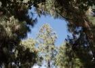 Фото туриста. здесь всегда хорошая погода. Лес возле Иерусалима.
