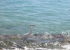 Фото туриста. Хозяин пляжа:)