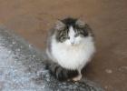 Фото туриста. Старорусские коты