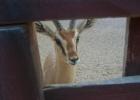 Фото туриста. зоопарк в отеле