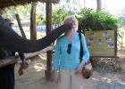 Фото туриста. поцелуй со слоном