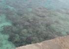 Фото туриста. море на пляже-риф прям у берега-что видно на фото