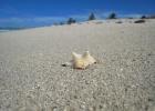 Фото туриста. Пляж из мелкого ракушечно-кораллового белого песка. Варадеро.