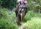 Фото туриста. Слоны