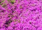 Фото туриста. цветы Риксос