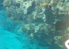 Фото туриста. кораллы с пантона