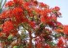 Фото туриста. Чудо-дерево
