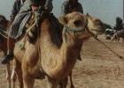 Фото туриста. На верблюдах по Сахаре