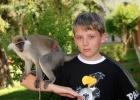 Фото туриста. по вторникам приводят обезьянку и ящерицу для фото
