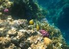 Фото туриста. рыбы-быбочки