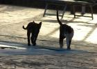 Фото туриста. египтянские коты...или египетские...)))