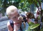 Фото туриста. филиппинский долгопят (тарсиер)