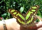 Фото туриста. В обсерватории бабочек