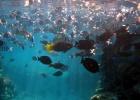 Фото туриста. рыбы в RRR