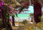 Фото туриста. вид на море из сада Nissi beach