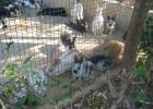 Фото туриста. зоопарк в Порте