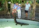 Фото туриста. обдолбанный крокодильчик