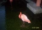 Фото туриста. розовый фламинго