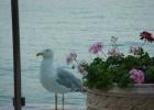 Фото туриста. Чайка