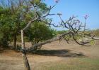 Фото туриста. Дерево на мысе около отеля