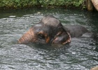Фото туриста. экскурсия на Elephant Tracking в Краби