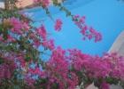 Фото туриста. все цветет- декабрь