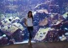 Фото туриста. океанариум в отеле Атлантис