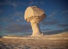 Фото туриста. Белые грибы пустыни