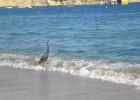 Фото туриста. Прогуливающаяся птица.