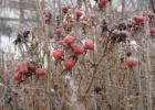 Фото туриста. Зимние ягоды