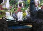 Фото туриста. в Фэнтэзи пиликаны-альбиносы