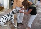 Фото туриста. на улицах старого города водятся приличные собаки:))