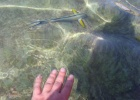 Фото туриста. Рыбки